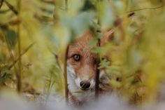 I See You by Topi Lainio
