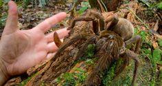 蜘蛛 - Google 検索