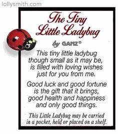 The Tiny Little Ladybug - Good Luck Wishes Pocket Charm