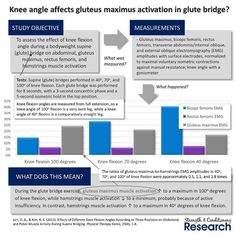 """The gluteus maximus contributes to hip extension along with the hamstrings and adductor magnus muscles. Of these three muscles the gluteus maximus seems to be the """"laziest"""" and tends to reduce activation particularly when the hamstrings are more highly activated.  As the hip approaches full hip extension bending the knee reduces hamstrings involvement by over-shortening the muscle. This over-shortening increases the overlap between the actin and myosin filaments of the individual muscle…"""