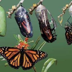"""""""Sii il cambiamento che vuoi vedere nel mondo"""". (Gandhi) Anche per cambiare in meglio la vita degli animali!"""