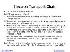 electron transport chain - Google Search