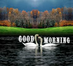 Send this natural morning card to someone special in your life. Free online Best Of Nature's Morning For You ecards on Everyday Cards Free Good Morning Images, Latest Good Morning, Good Morning Picture, Good Morning Good Night, Morning Pictures, Morning Hugs, Good Morning Tuesday, Good Morning Greetings, Morning Quotes