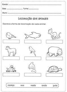 Pin Em Animais