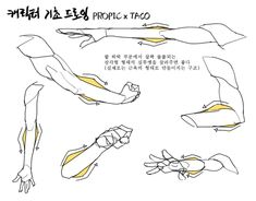 Hand Drawing Reference, Anatomy Reference, Art Reference Poses, Human Anatomy Drawing, Anatomy Art, Anatomy Sketches, Poses References, Anatomy Tutorial, Drawing Poses