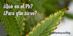 El PH es algo muy importante para nuestras plantas de cannabis. Aqui tienes algunos consejos para conseguir el ph adecuado para el cultivo de marihuana.