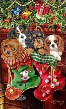 Cavalier King Charles Christmas cards are 8 x 5 and come in packages of 12 cards. One design per package. All designs include envelopes, your personal message, and choice of greeting. Christmas Scenes, Noel Christmas, Christmas Animals, Vintage Christmas Cards, Christmas Pictures, Christmas Card Messages, Xmas, Illustration Noel, Christmas Illustration