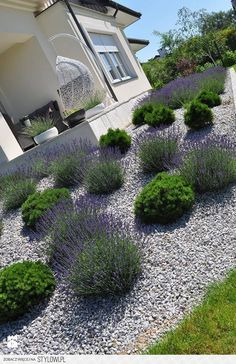 front yard landscape design 45 easy and beautiful front yard landscaping ideas on a budget 12 Front Garden Landscape, Lawn And Garden, Modern Landscaping, Front Yard Landscaping, Landscaping Ideas, Mulch Ideas, Rock Garden Design, Garden Inspiration, Outdoor Gardens