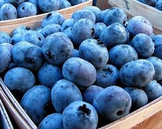 Blueberries - 10 Superfoods ALL Vegans should consume! Article by Butterflies Katz: http://vivalavegan.net/community/articles/154-10-superfoods-all-vegans-should-consume.html