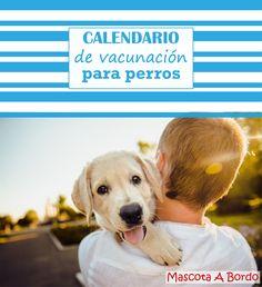 Una de las cosas más importantes cuando tienes un perro es cumplir el protocolo de vacunación.💉 ¿Está tu perro bien protegido para las enfermedades?🐕 Averígualo en este artículo.☺️