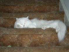 My little bratty cat. Love her to death. <3