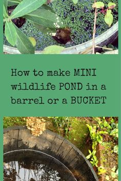 How to make a mini wildlife pond. A pond is the best way to help wildlife in your garden, and here are tips for small ponds in small or middlesized gardens. Ponds For Small Gardens, Small Ponds, Mini Pond, Container Water Gardens, Diy Container Pond, Natural Pond, Water Pond, Garden Water, Pond Design