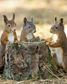 Eekhoorns aan 'tafel'.