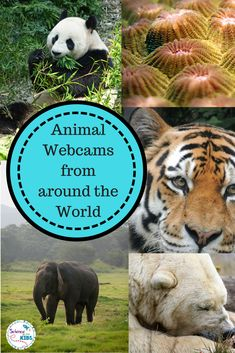 5 Animal Webcams Websites. These webcams feature all kinds of animals from around the world. The websites also offer no prep teaching activities and ideas.