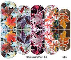 Слайдер-дизайн премиум, Осень, листья, растения ult27 - 1