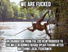 A fishing orangutan