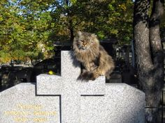 Cat from the Montmartre Cemetery in Paris, France. Many French celebrities have been buried here, including Alexandre Dumas, Adolphe Sax, Bernard-Marie Koltès, Stendhal, Michel Berger, Dalida, Edgar Degas, Hector Berlioz, and François Truffaut.