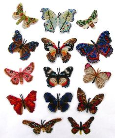 14 African Lepidopteras, Sova Enterprises