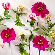 dahlias, jasmine and honeysuckle edible flowers