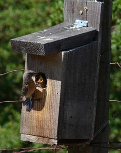 This site has free plans on all types of bird house boxes ...