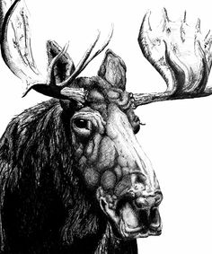 moose. illustration.drawing. elch. zeichnung. all rights by von ERIKA.