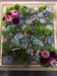 Framed succulents by Butterfly Petals