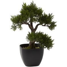 "Nearly Natural 15"" Cedar Bonsai (3.300 RUB) ❤ liked on Polyvore featuring home, home decor, floral decor, plants, fillers, flowers, decor, flower stem, bonsai tree pot and nearly natural"