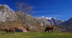 #naturaleza #nature #PicosdeEuropa #turismo #tourism #Asturias #ParaísoNatural #Spain