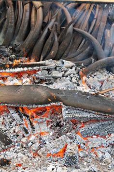 Gabon ivory burn