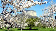 Almendros en flor, huele a primavera