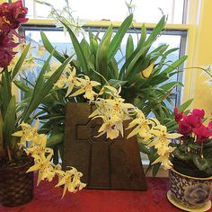 How to Make Orchids Reflower - Organic Gardening - MOTHER EARTH NEWS