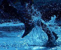 Blue Run