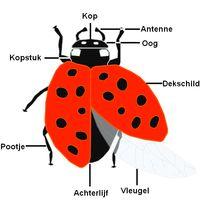 * Lieveheersbeestje en veel andere info over kriebelbeestjes yurlspagina
