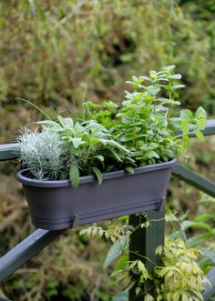 The window box garden have been designed to feature an array of herbs and edible plants which include:  Chives  Marjoram  Mint  Parsley  Rosemary  Sage  Tarragon  Thyme