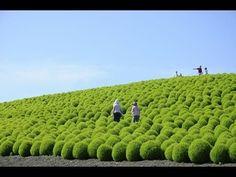 Hitachi Seaside Park in Japan
