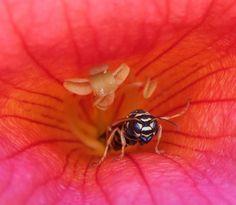 Macro - wasp