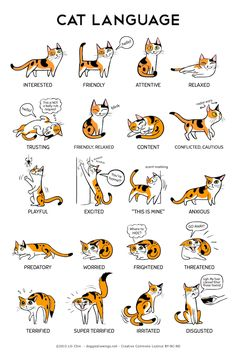 An Informative Illustration That Explains What Cats Are Communicating Through Body Language