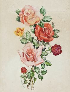 Helen Haywood    Roses    19th - 20th century