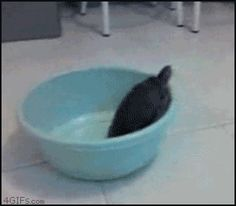 So close and yet so far. Some days I can't help but feel like this...(gif)