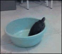 Yes i'm Free, Noooooo!