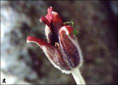 봄이 오면  부모도 반의사가 되어야 한다  www.koreapediatrics.com