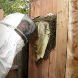 Print and Internet Resources for Natural, No-Treatment Beekeeping | Root Simple