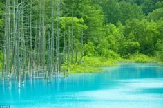 Stunning phenomenon: A dyke built in Biei town, Hokkaido, Japan, to stop volcanic mudflow is now a top beauty spot because of its beautiful baby blue water