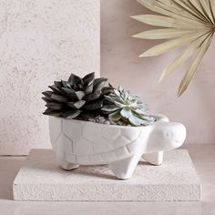 Purchased pot and succulents at West Elm 20.00 for planter .99 for plants that were on clearance. Bonus they plant for you in store at no extra cost to you. Saved with coupon 20% off entire purchase I really like this. Wish it was a Bear planter. One planter died, the other is hang in there. They don't like the cold didn't make it at all. One has candy the other drink packets you add to bottled water.