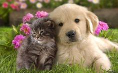 A kitten and puppy cuddling together in the grass.