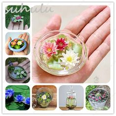 Lotus Seeds Mini New Hyacinth Pond Water Lily Seeds Indoor Pots – Lovely Seeds Hydrangea Seeds, Orchid Seeds, Flower Seeds, Flower Pots, Lotus Flower, Climbing Clematis, Clematis Vine, Indoor Flowers, Hanging Flowers