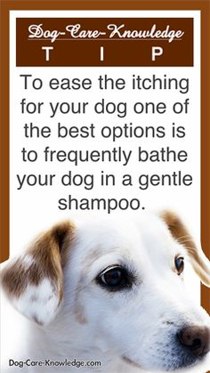Dog skin allergies - Try these simple remedies and gentle shampoos to give itch relieve to your itchy dog.