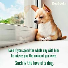 Such is the love of a dog