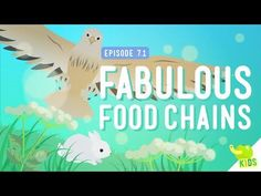 ▶ Fabulous Food Chains: Crash Course Kids #7.1 - YouTube                                                                                                                                                                                 More