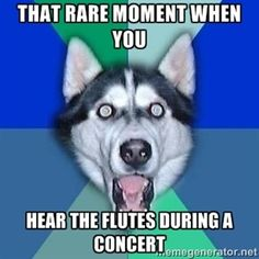 That rare moment when you Hear the flutes during a concert | Spoiler Dog
